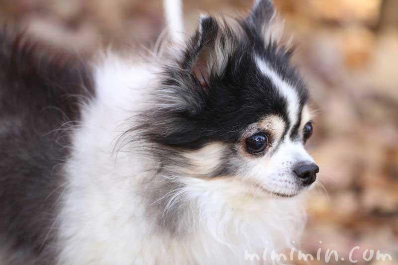 目黒清掃工場緩衝緑地・犬の散歩の画像