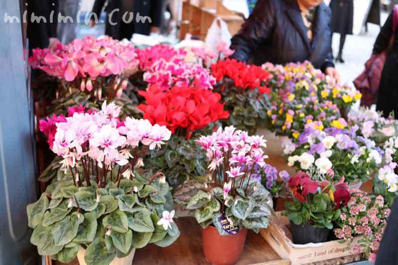 シクラメンの鉢植え(恵比寿マルシェ)の写真