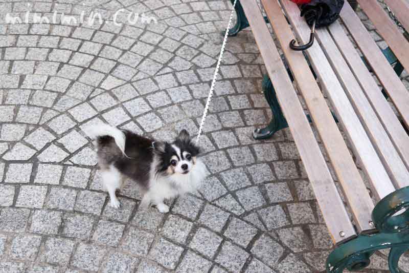 恵比寿ガーデンプレイスの恵比寿マルシェの犬の画像
