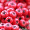 赤い実|ピラカンサの写真