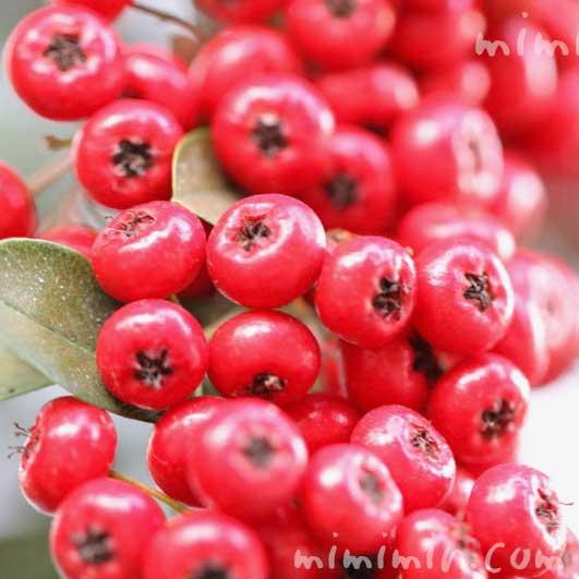 赤い実|常磐山査子の写真