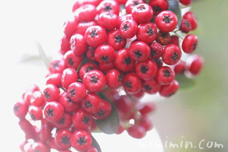 ピラカンサ(トキワサンザシ)・赤の写真