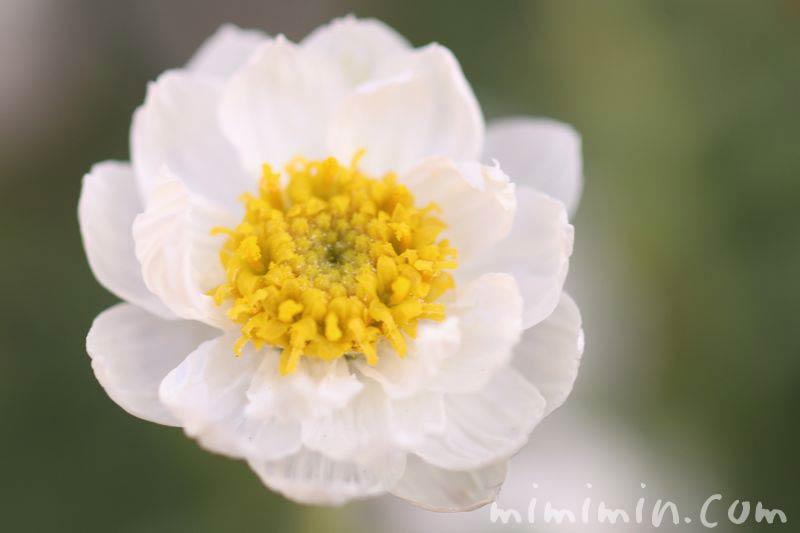 花かんざしの画像