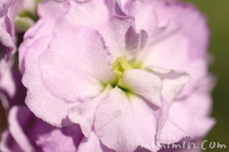 ストック 薄いピンクの写真