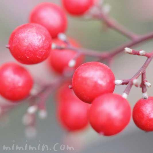 ナンテンの赤い実の写真と花言葉の画像