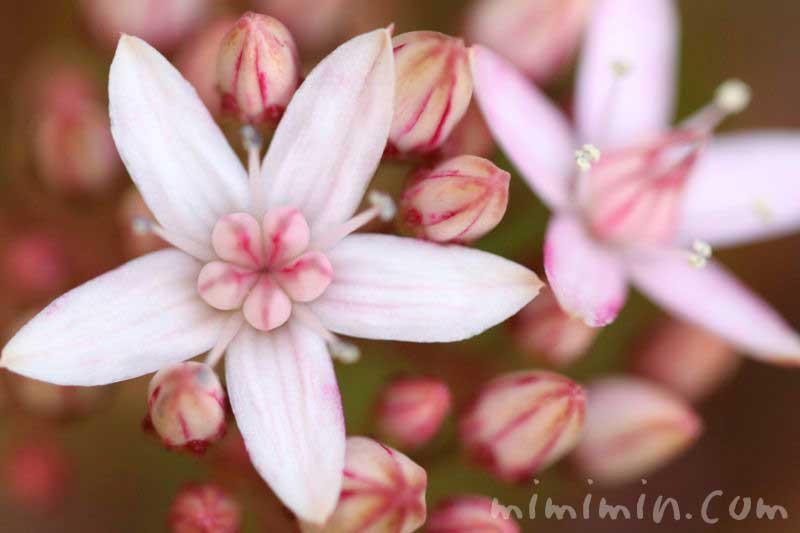 花月の花の画像