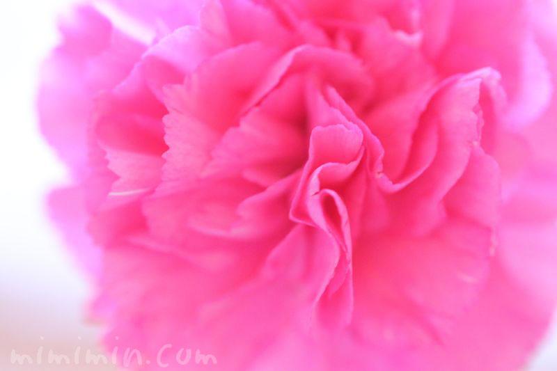 カーネーションの花