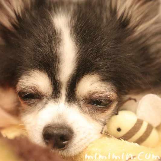犬の寝顔の写真