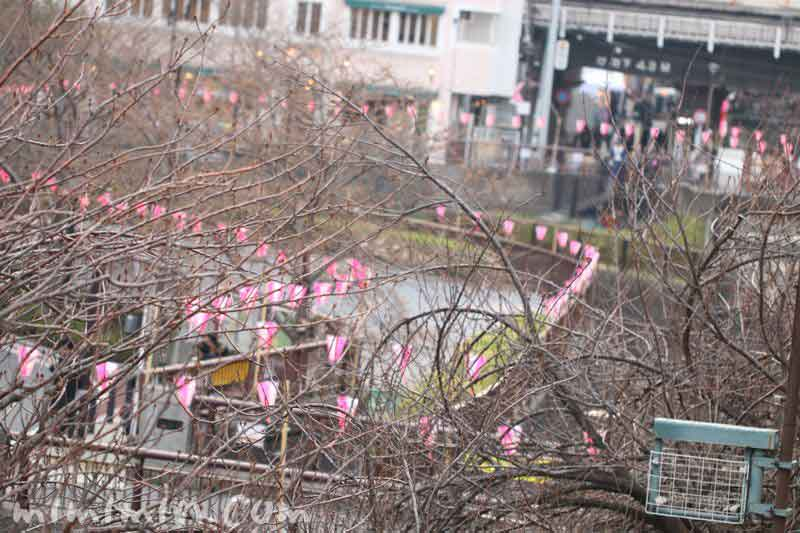 目黒川 桜はまだつぼみの画像