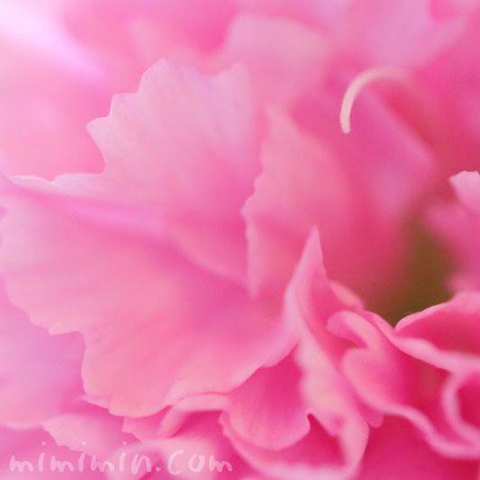 カーネーションの誕生花