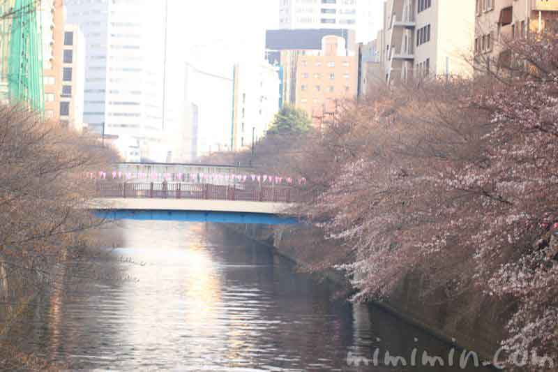 目黒川 ソメイヨシノはまだつぼみの写真