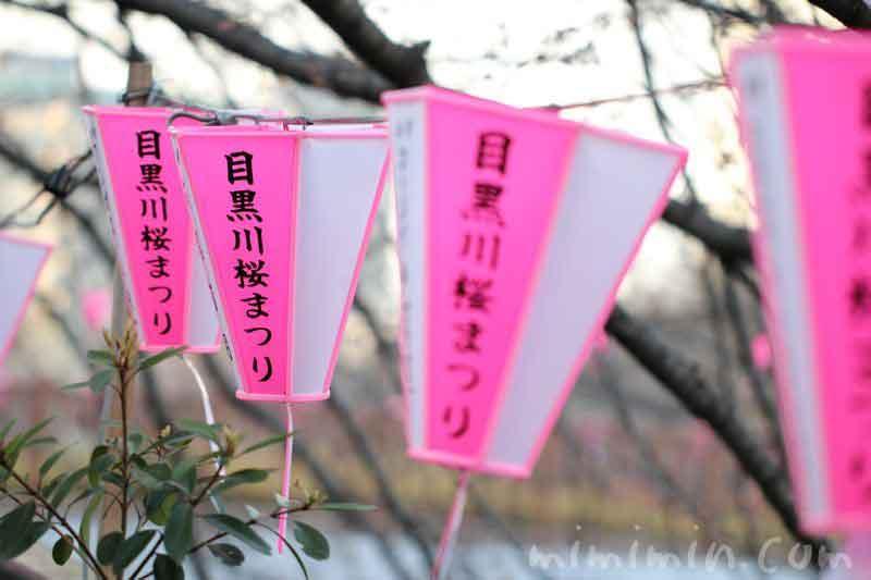 目黒川 桜まつりの画像