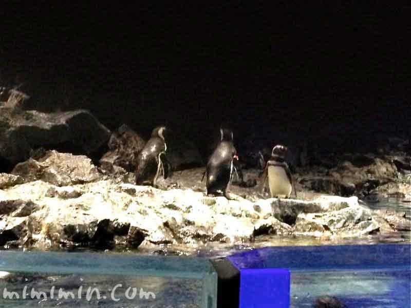 ペンギン・すみだ水族館の写真