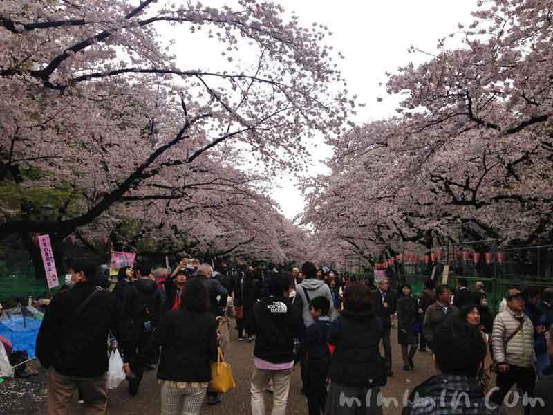 不忍池の桜の写真