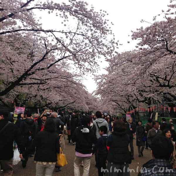 上野公園の桜のお花見の写真