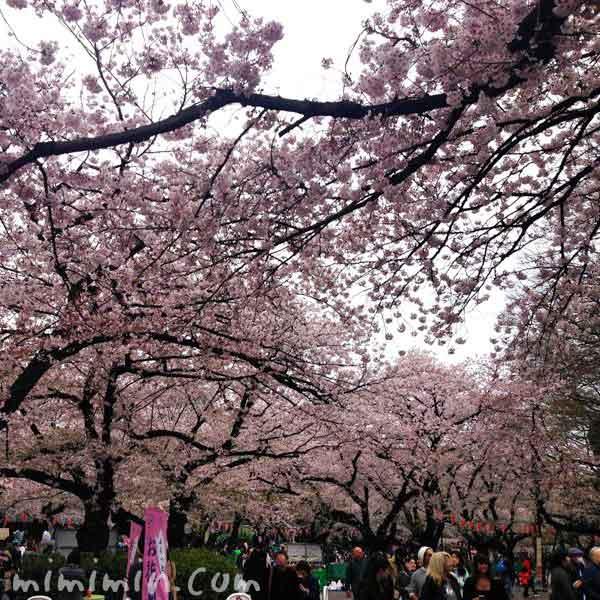 上野公園の桜 花見