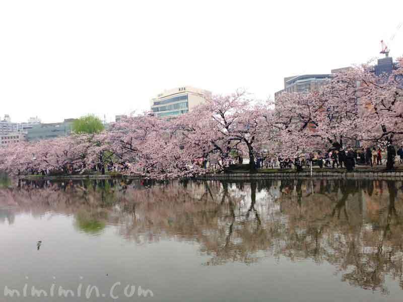 不忍池の桜・ソメイヨシノの画像