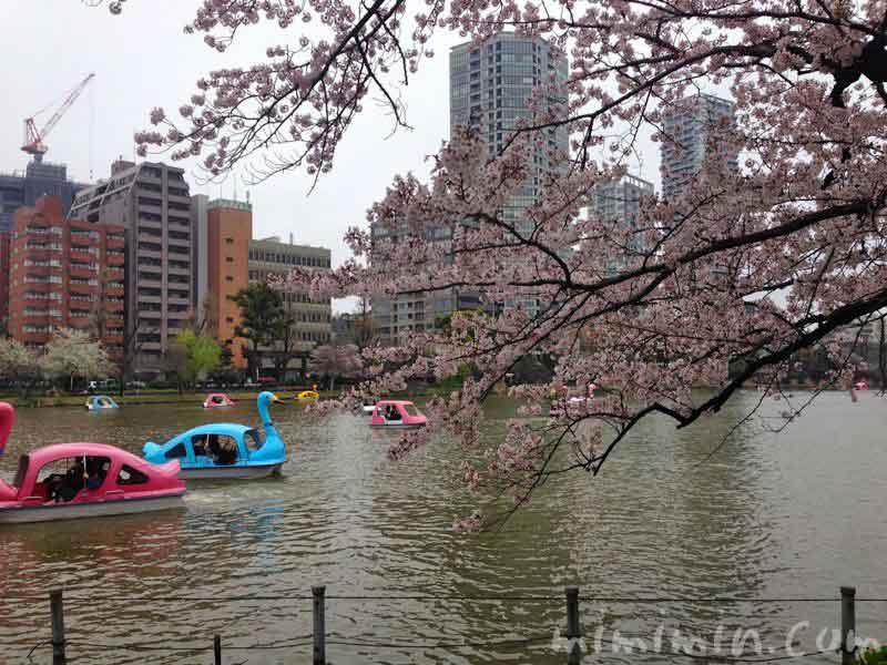 不忍池のボートの写真