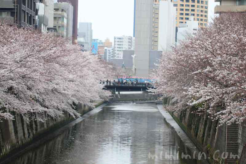 目黒川 4月の写真