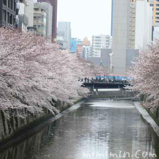 目黒川のお花見の画像