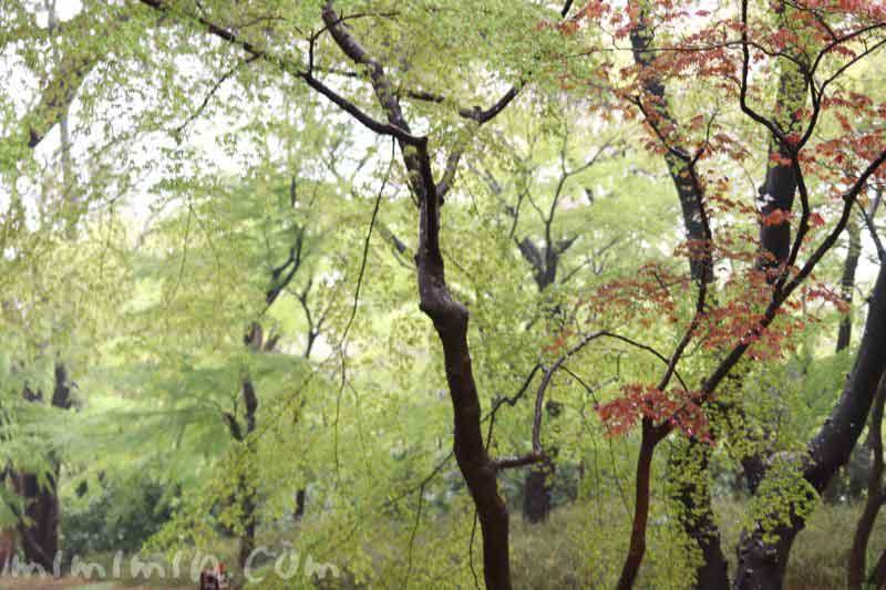 新宿御苑・雨の画像