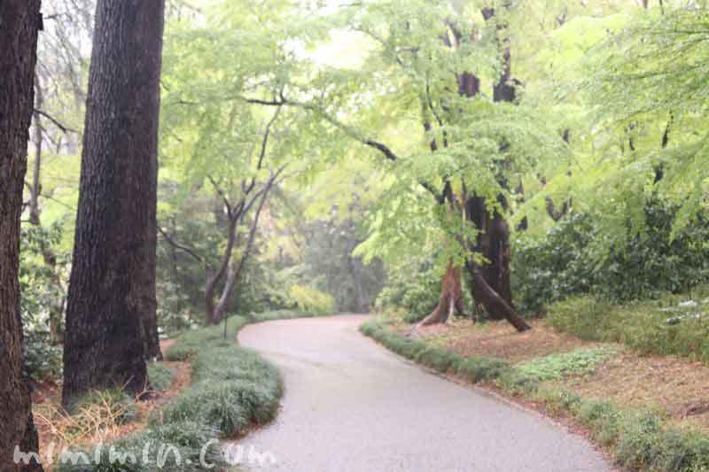 新宿御苑・雨