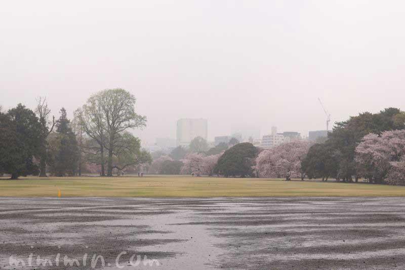 雨の新宿御苑の画像