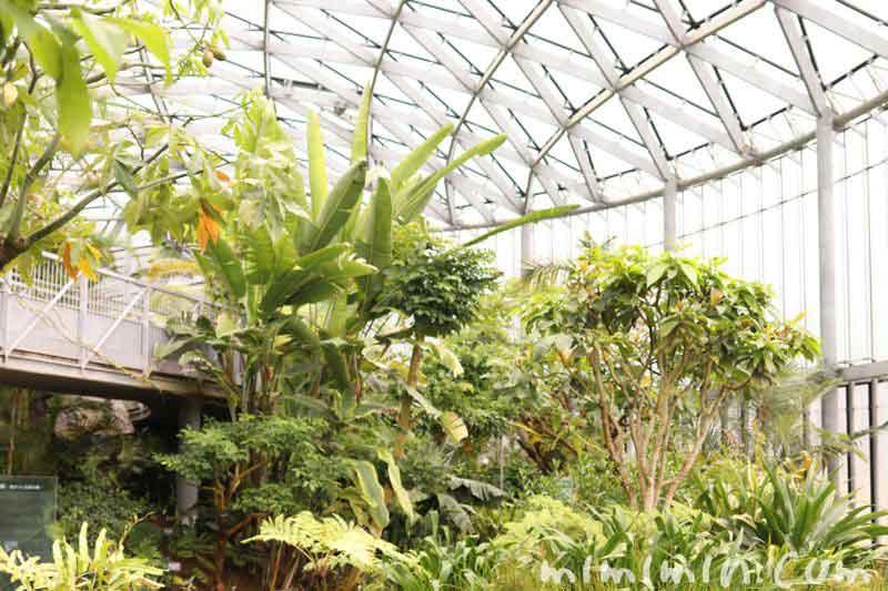 新宿御苑・温室の写真