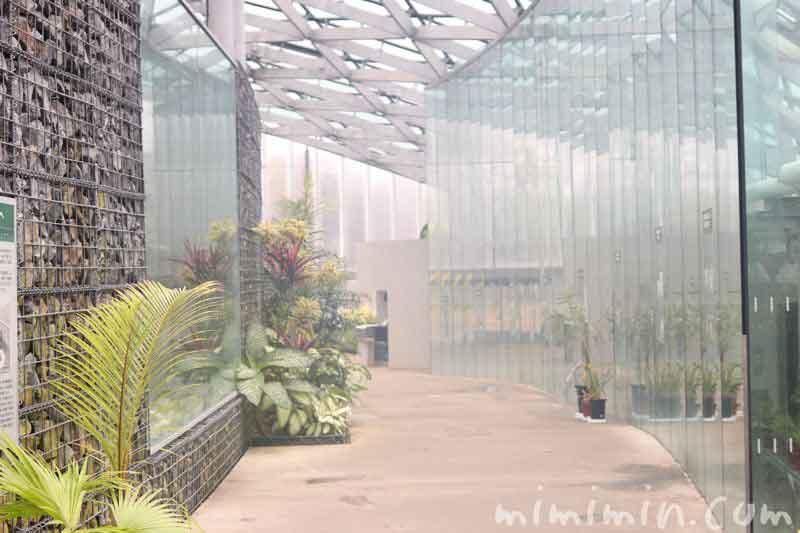 温室(新宿御苑)の写真