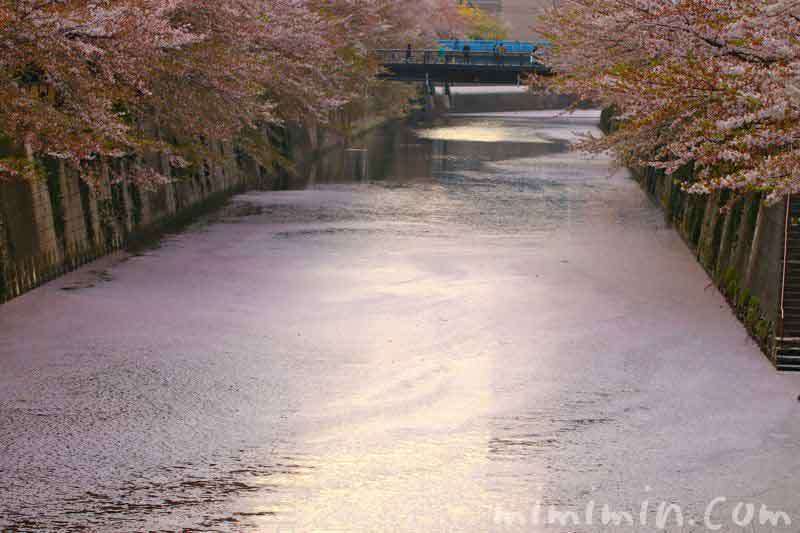 花筏(目黒川の桜)