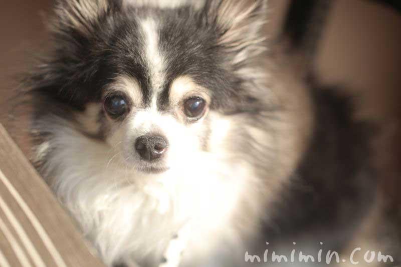 俺のベーカリー&カフェのテラス席の犬(恵比寿ガーデンプレイス)の写真