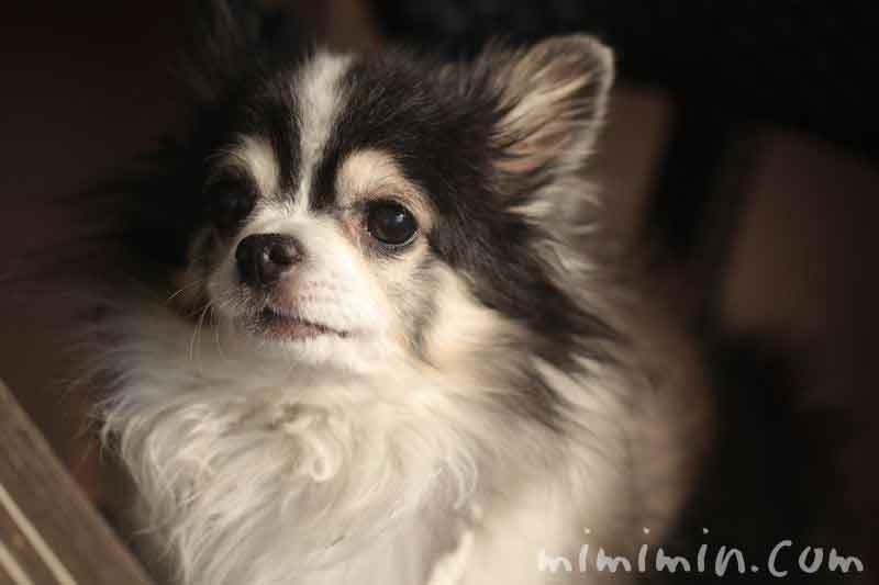 俺のベーカリー&カフェ・犬同伴の画像