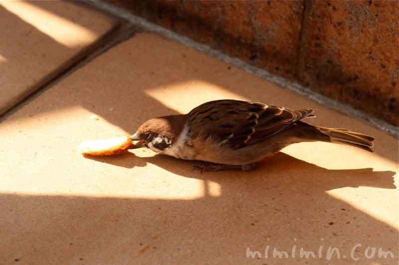 パンを食べるスズメの写真