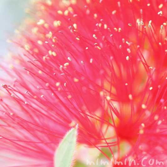 金宝樹の花の写真と花言葉