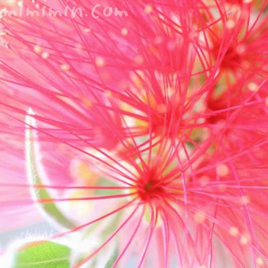 金宝樹の花の写真 花言葉の画像
