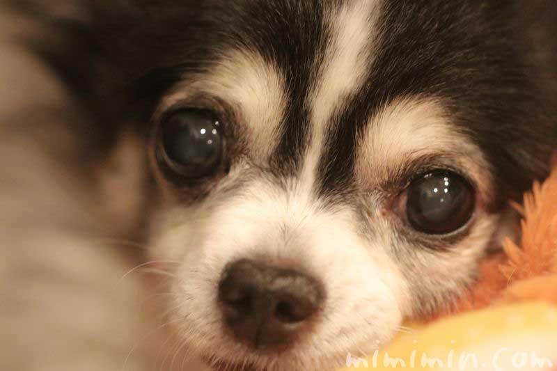 犬の鼻がカサカサ