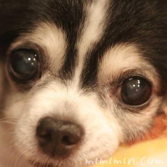 犬の鼻がカサカサの画像