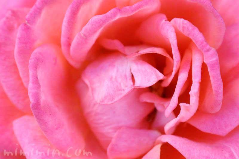 バラの香りの効能