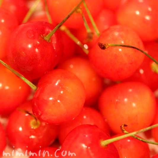 桜桃の花言葉の写真