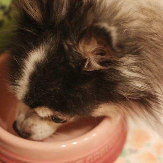 ル・クルーゼの犬用食器の画像