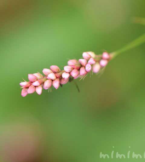 藍(アイ)の花の写真・花言葉・名前の由来