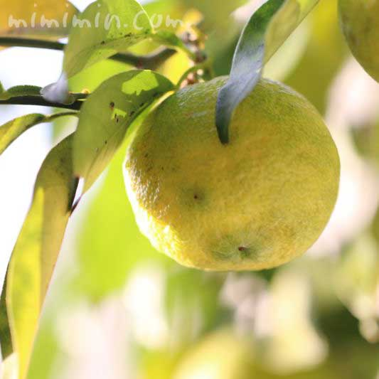 柚子の花言葉の画像