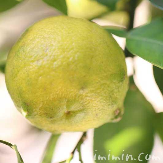 柚子の効能の画像