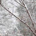 東京の大雪の写真