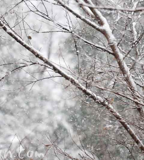 東京で大雪|ワンコと雪見学