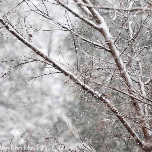 東京の雪の画像