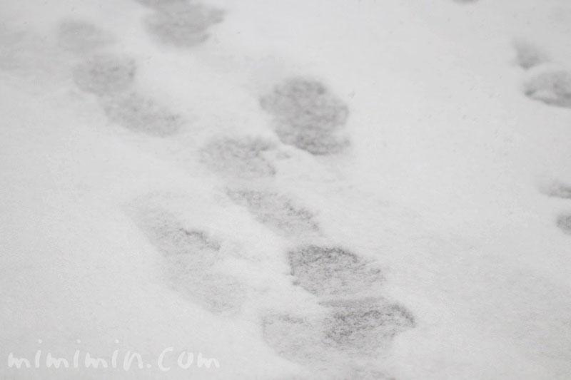 雪の足跡の画像