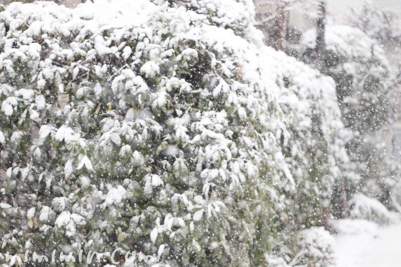 東京の積雪