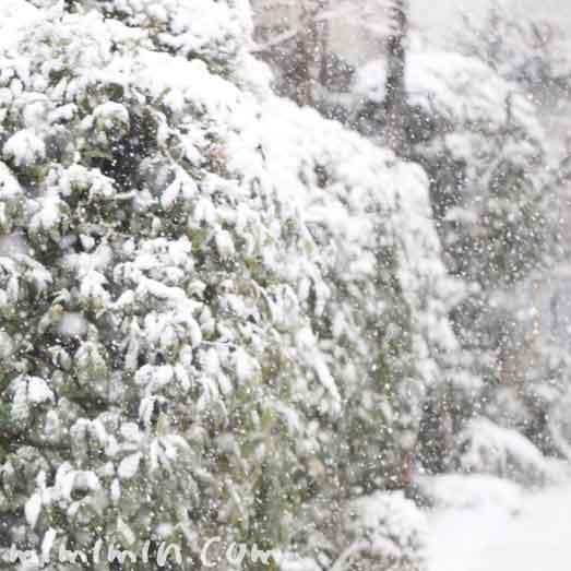 東京に大雪警報の写真