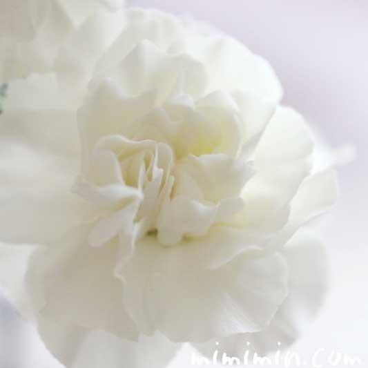 白いカーネンションの花の写真 花言葉